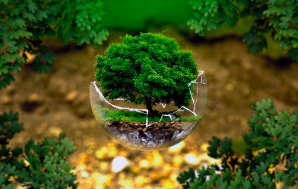 Cuidar y mantener al medio ambiente
